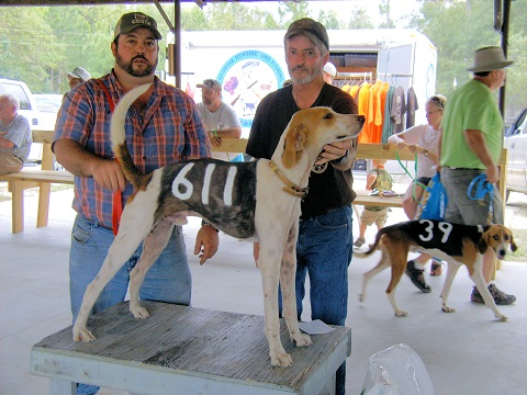 The best male and best in show went to Kenny Williams, Nahunta, GA. with #611 R & W's Bogie