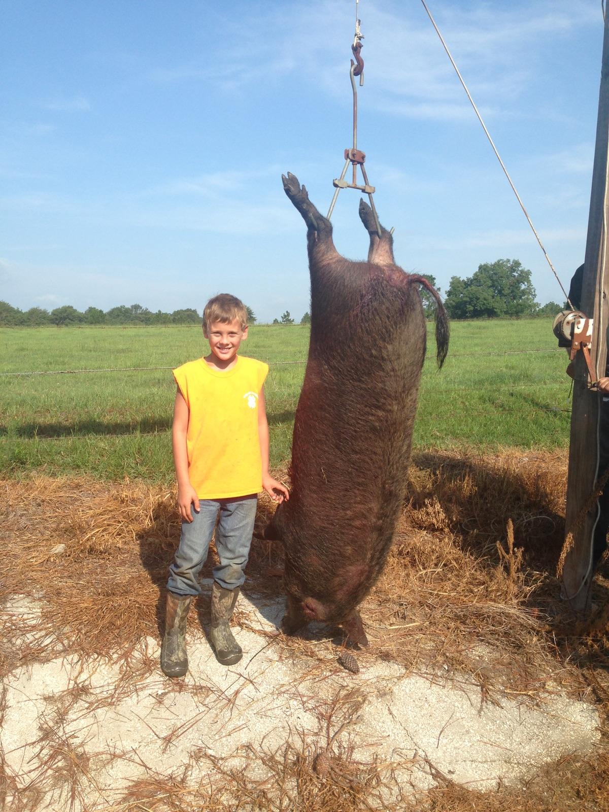 Lane Tres Fiveash with his 400 lbs wild hog that his dog Dan the Man caught